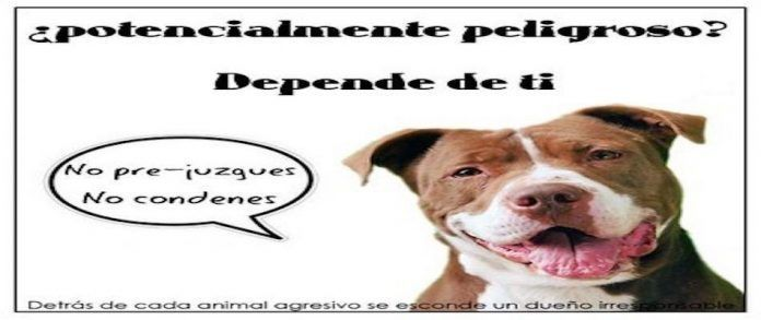perros ppp